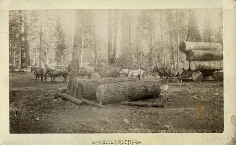 1895 Logging.