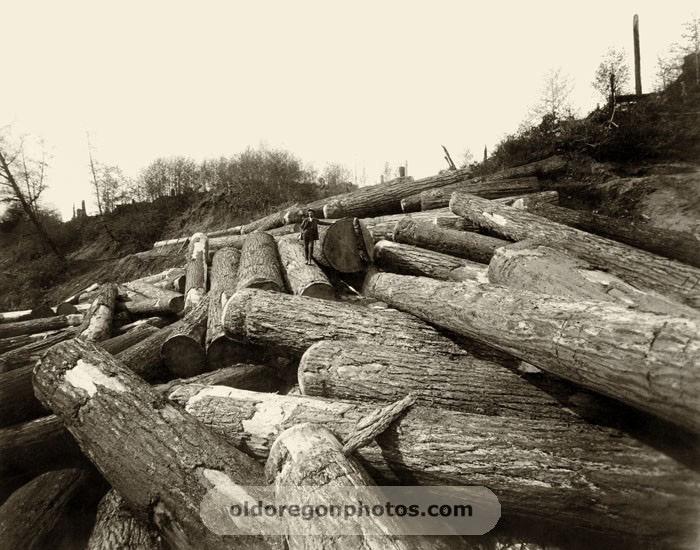 1898 Logging foreman admires his crew's output.