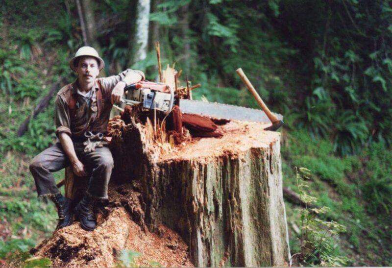 Chainsawyer after felling a large cedar tree.
