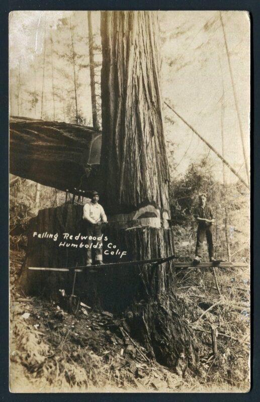 Falling redwoods, Humboldt County, CA