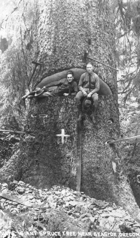 Giant spruce tree near Seaside, Oregon.