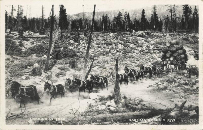 1895 Logging Wagon in Siskiyou County, CA.