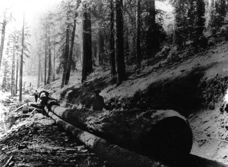 1900 Chute Logging.