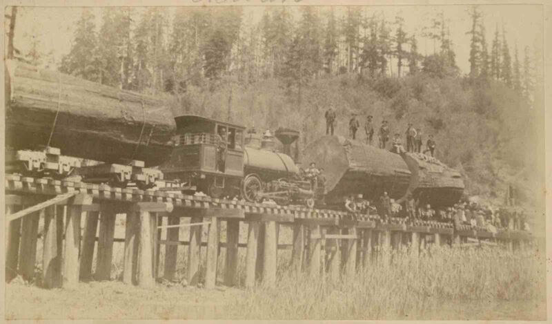 1900s Redwood logs enroute to the log yard.