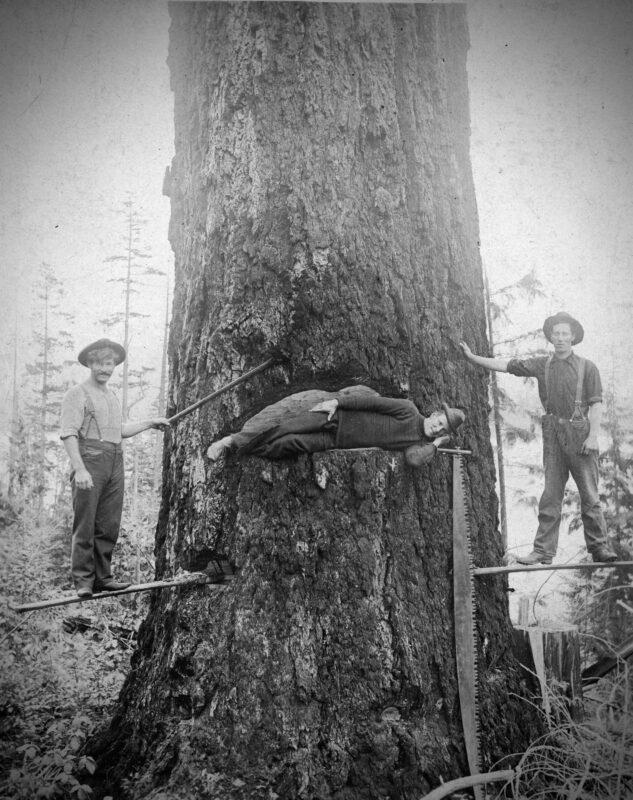 1910 Tree felling using spring boards, somewhere in B.C., Canada.