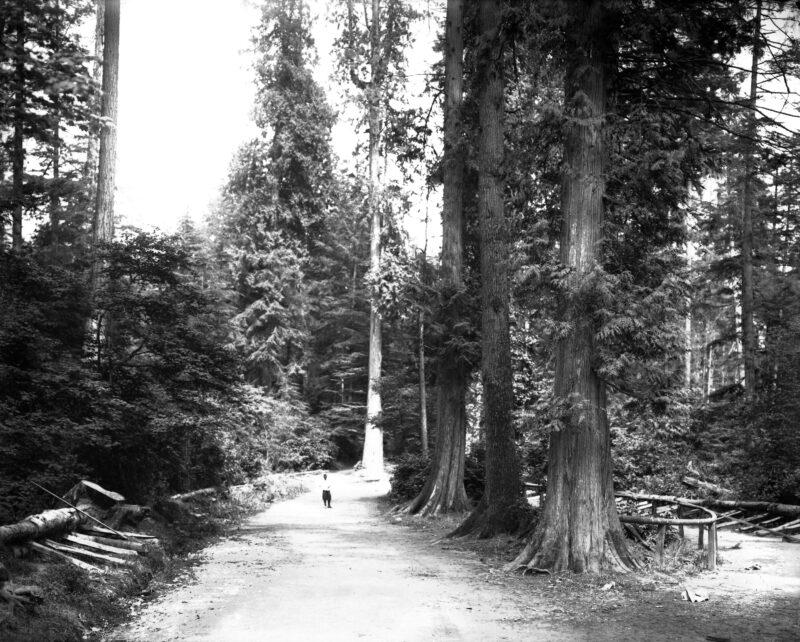 1912 Stanley Park, Vancouver, B.C. Canada.