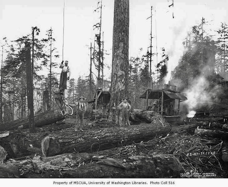 White Star Lumber Company, probably near Whites.