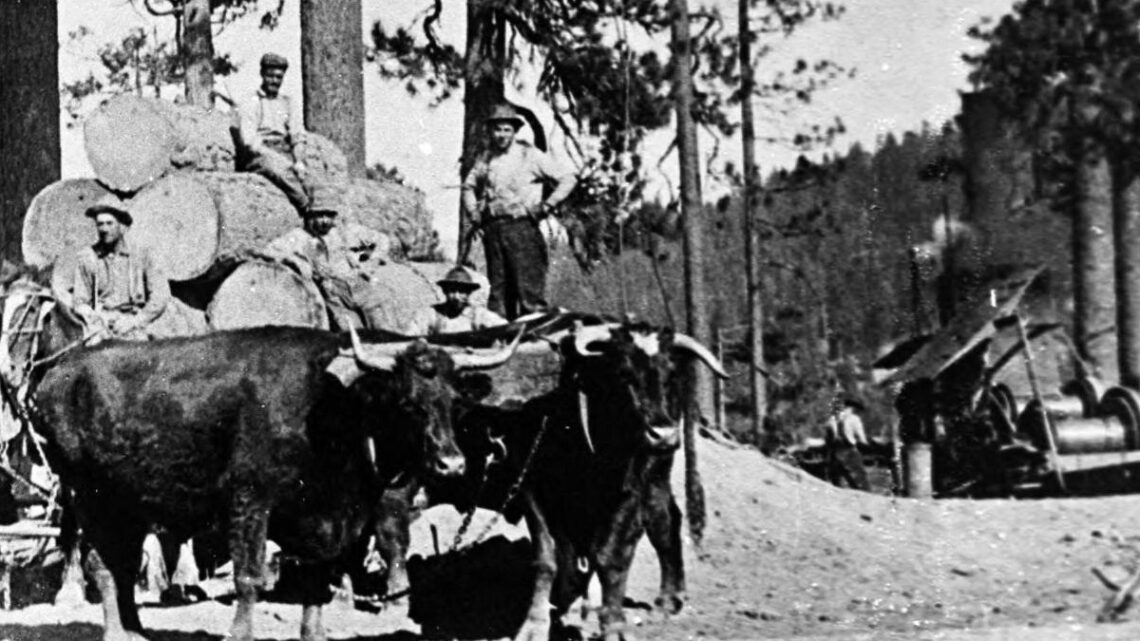1910 Logging near Clio, CA, US