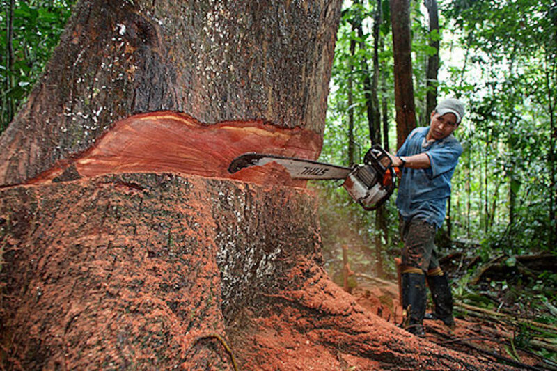 2014 12 police stations opened to keep ahead of illegal logging in Peru.