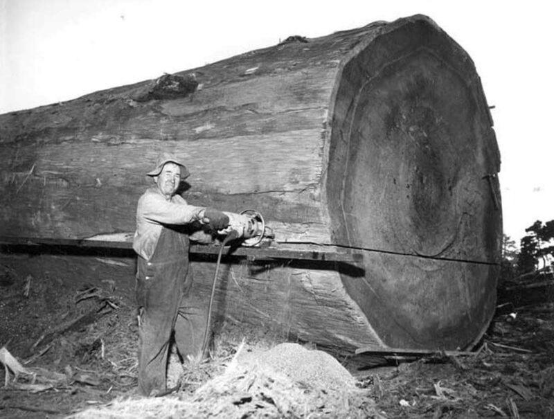 Chainsawyer cutting into a bog log.