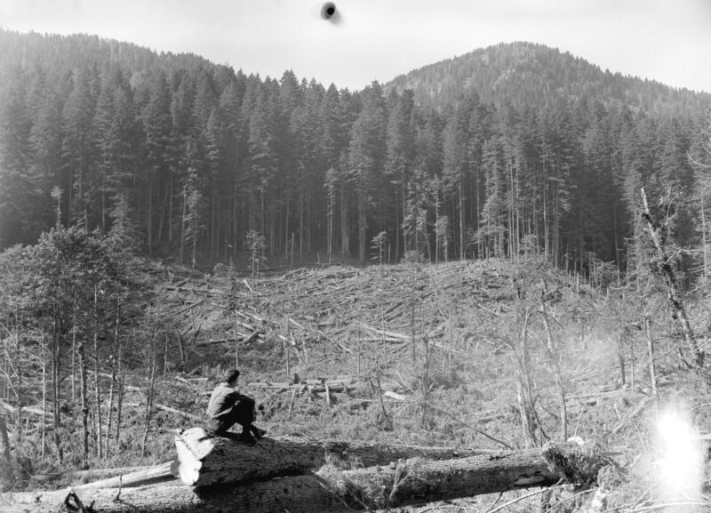 1940 View of Clear Cut, Youbou, B.C.