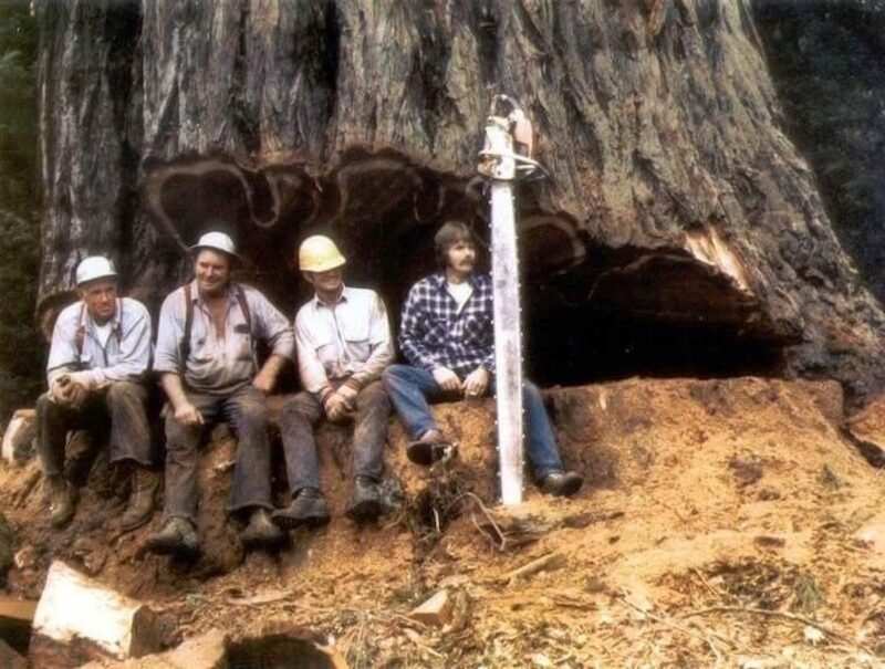 1970s Chansawyers break from hinge cutting.