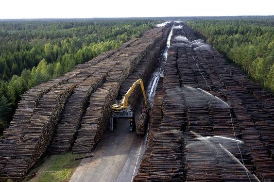 Massive stock pile of logs.