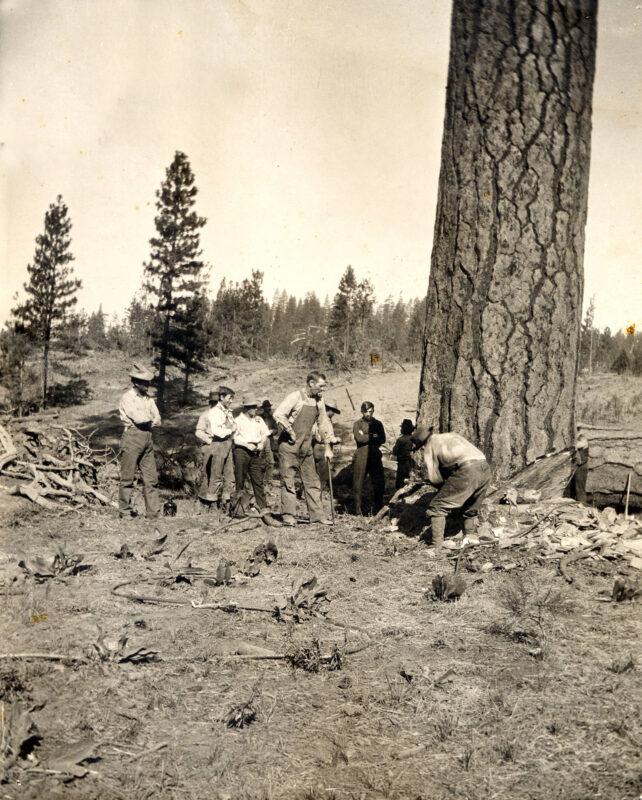 School in session. 1919 Tree felling.
