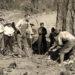 1919 Tree felling.