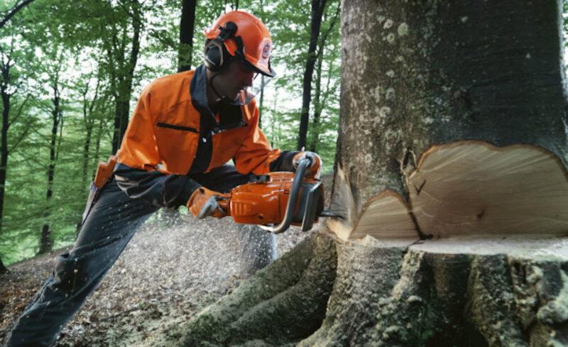 2017 Seized logging activity.