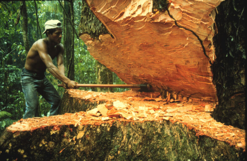 2014 More than 120 thousand hectares of forests were deforested in 2013 in Colombia.