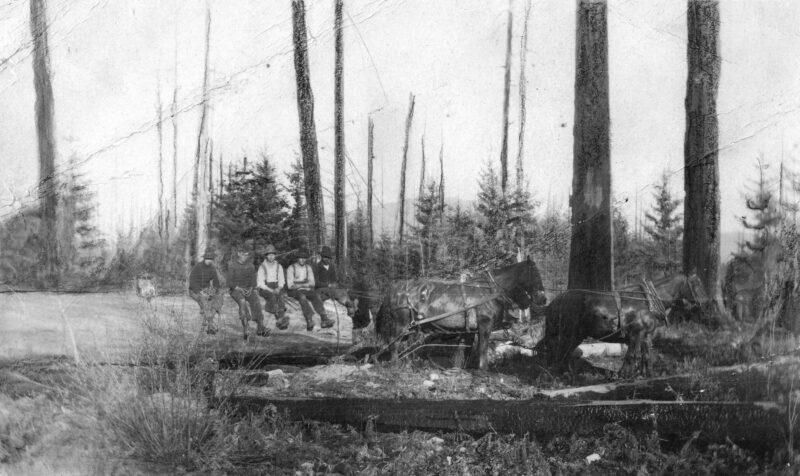 1905 A four-horse team dragging logs.