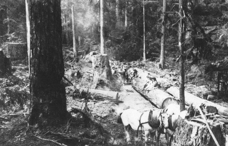 1895 Logging west of MacDonald Street, Vancouver, BC