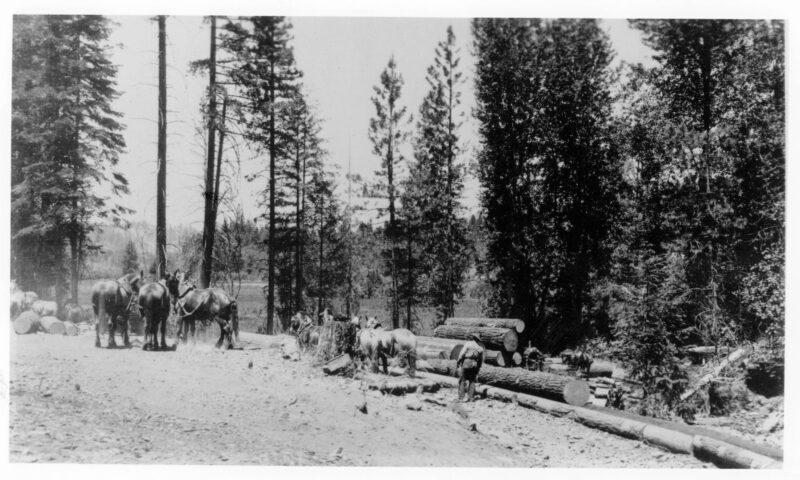 1900 Cross-hauling.