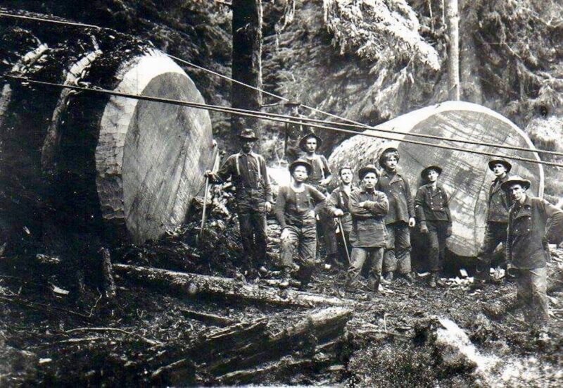 Woodsmen skidding big logs.
