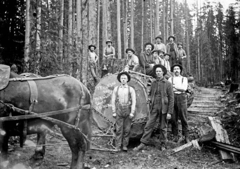 Horse team and crew with large log on skid road.