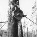 skidding-logs-vintage-photos-feature