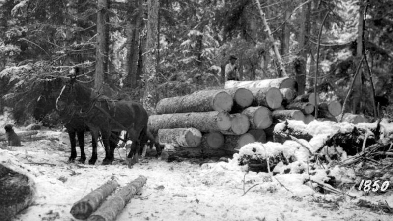 1928 Clemina, BC - vintage logging with horses