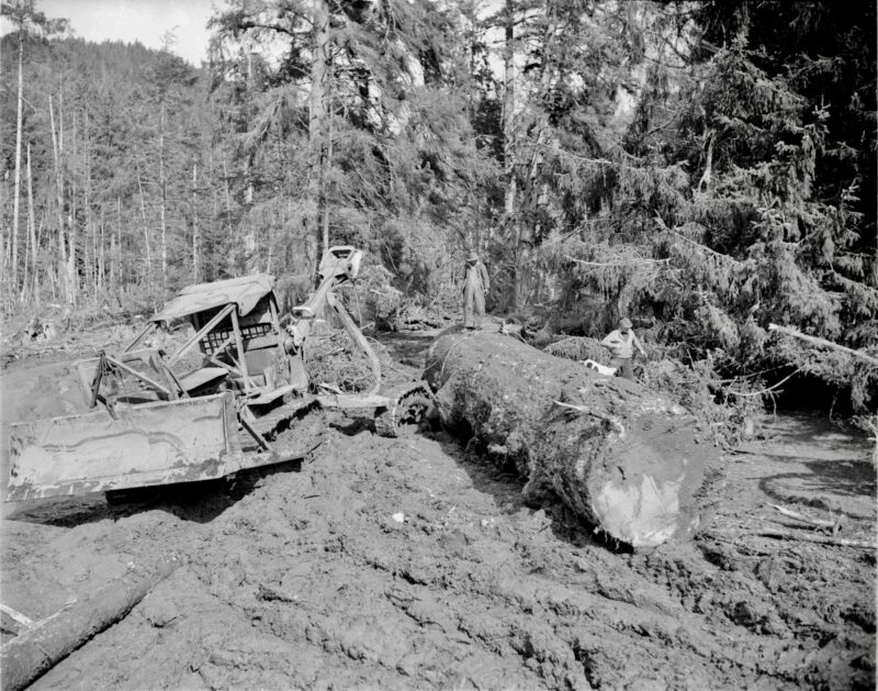 1945 Moving logs with a tractor for Pacific Mills