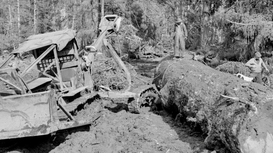 1945 Moving logs with a tractor for Pacific Mills on the Queen Charlotte Islands, BC.