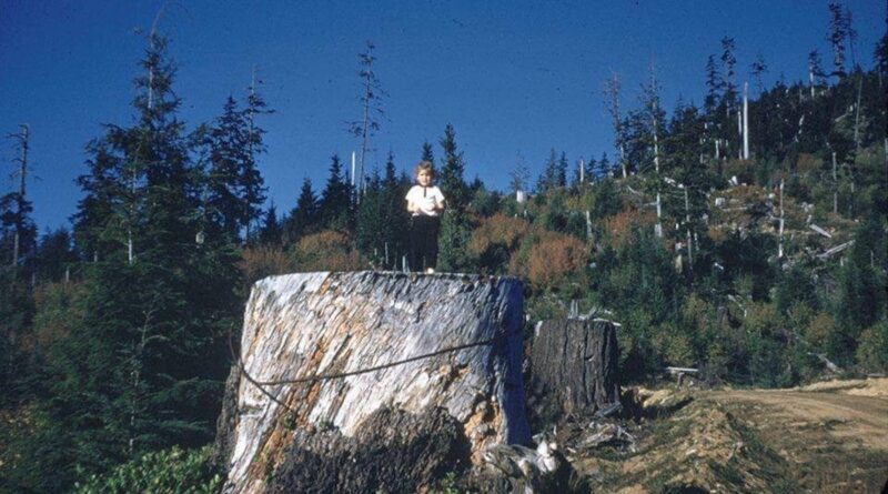Child standing on a large stump cut.