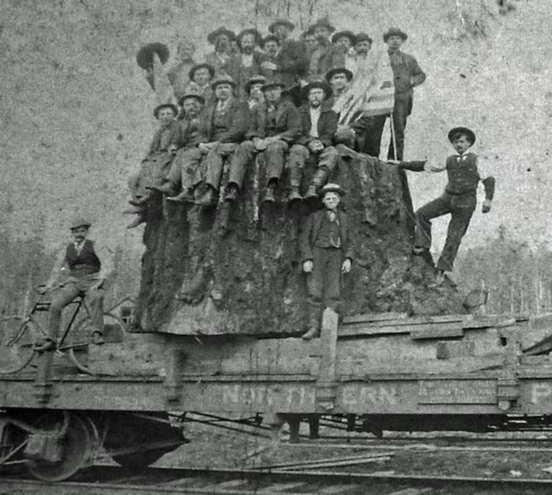 A stump cut loaded on the railway.