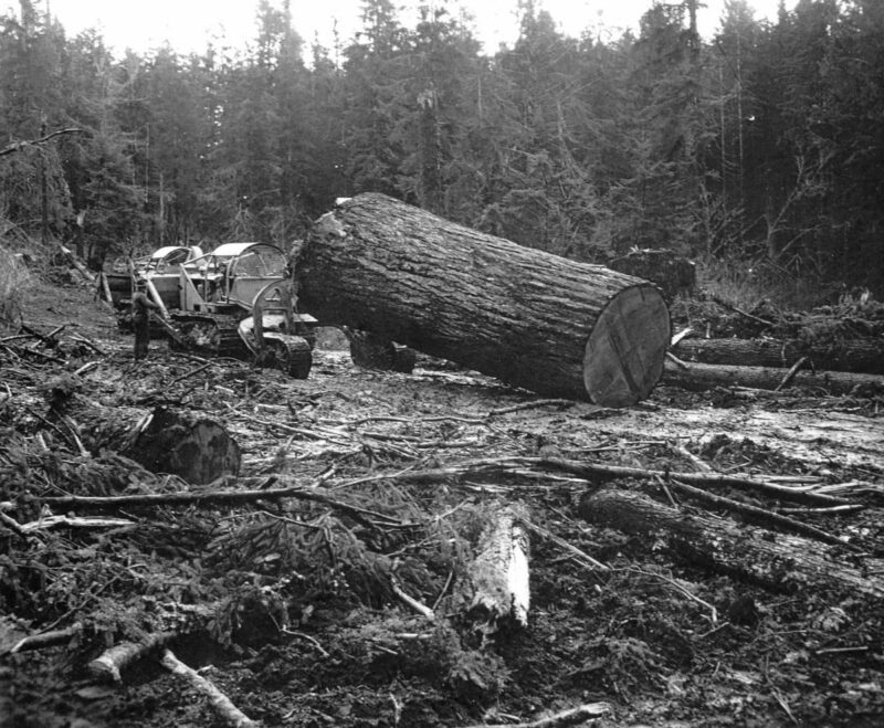 California Barrel logging