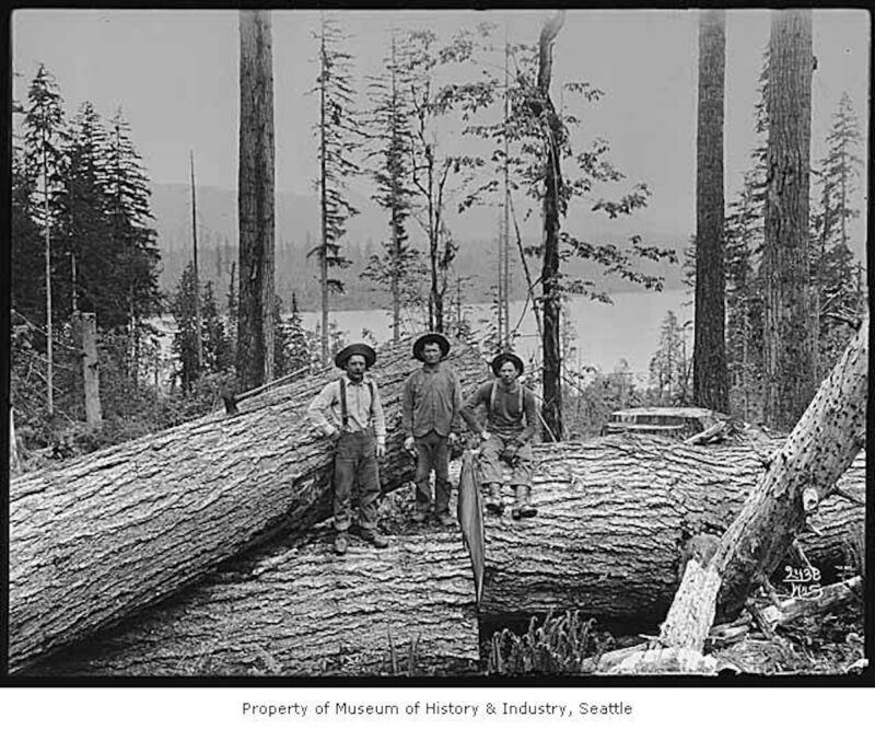 1902 Loggers with large logs at top of chute.