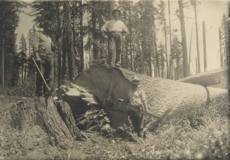 1900 Loggers.