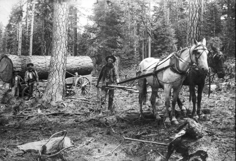 1900 Logging at the Wetzel Mill.