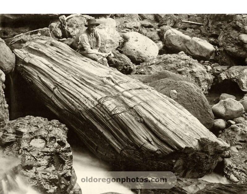 1900s, a surveyor with a fossilized log.