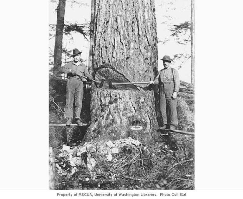 1920s Snoqualmie Falls Lumber Company.