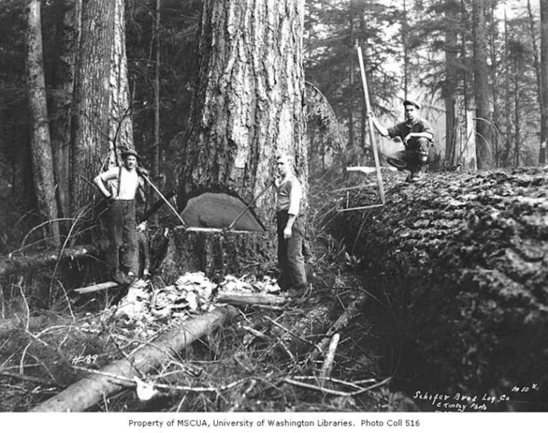 1920s Schafer Brothers Logging Company.