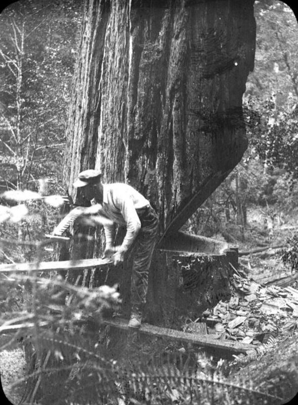 Woodsman moving a plank to re-position himself.