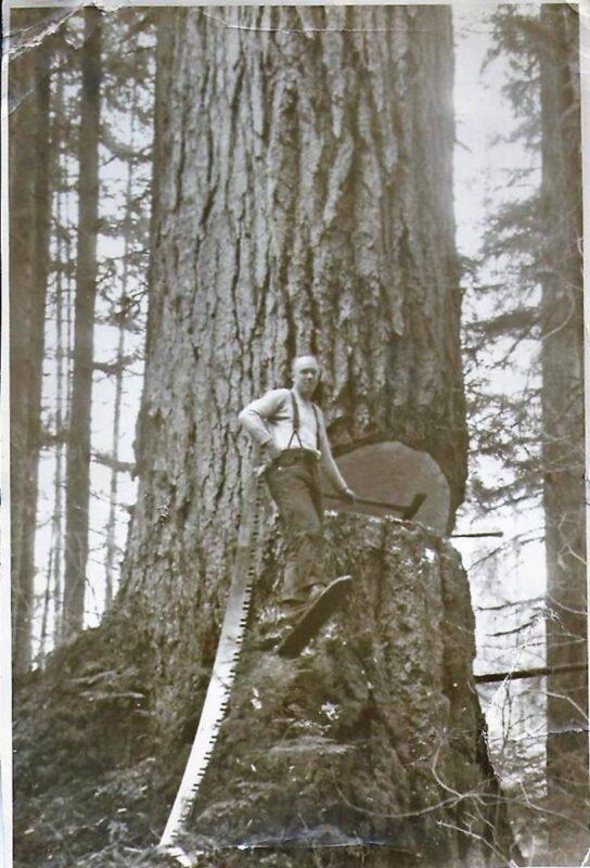 Solo woodsman performing a hinge cut.
