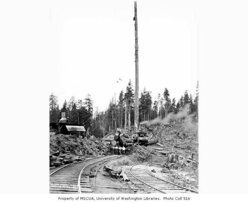 Crew at loading site with loaded flatcar, two donkey engines and spartree, camp 15, North Western Lumber Company, near Vesta.