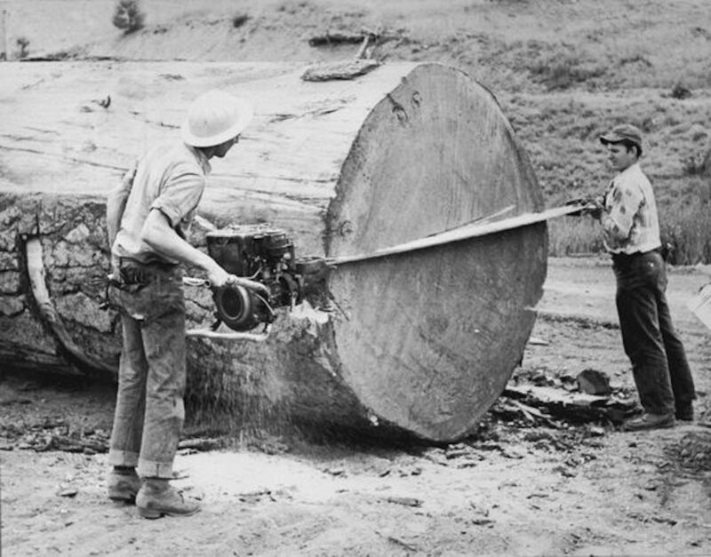 2 man chainsaw splitting a larger log.