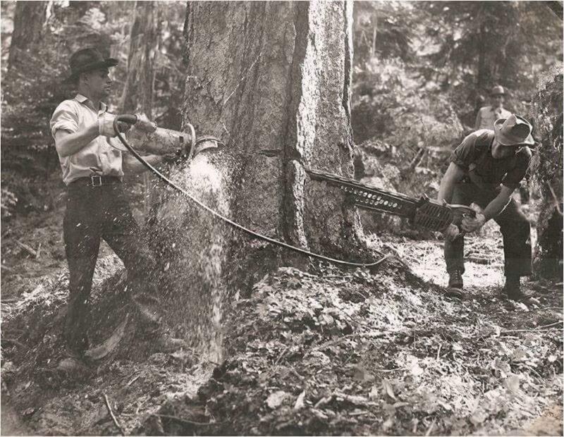 Men demonstrating a 2 man chain saw.