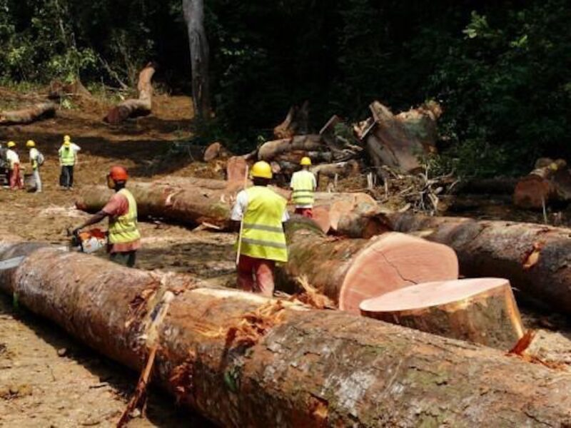 2017 Cameroon has been the leading provider of sawn timber to the UK between January and August 2017.