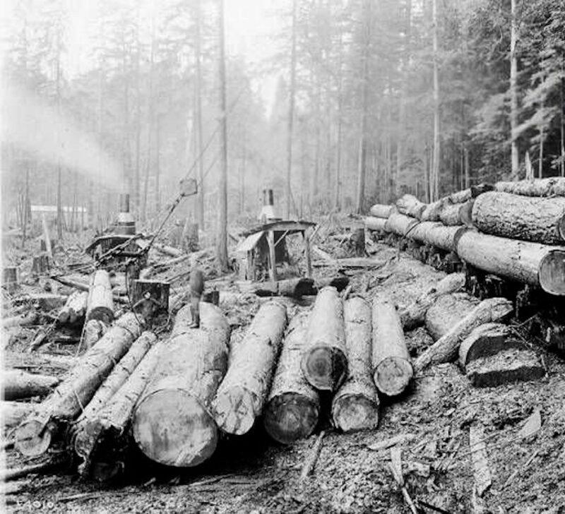1904 Loading logs on railroad flatcars using steam donkey engine, Pierce County, CA.