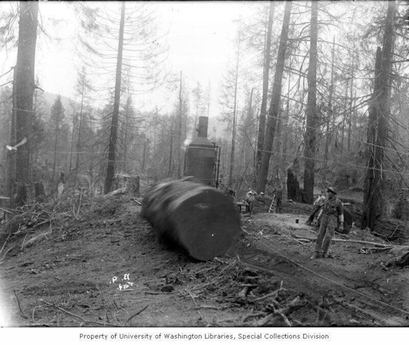 1903 Cut log rolling downhill after being winched by donkey engine.