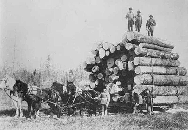 Horses hauling a heavy sled of logs