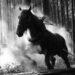 Steaming horse logging