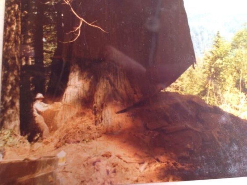 Jewel Robertson logging the redwoods in Northern California.